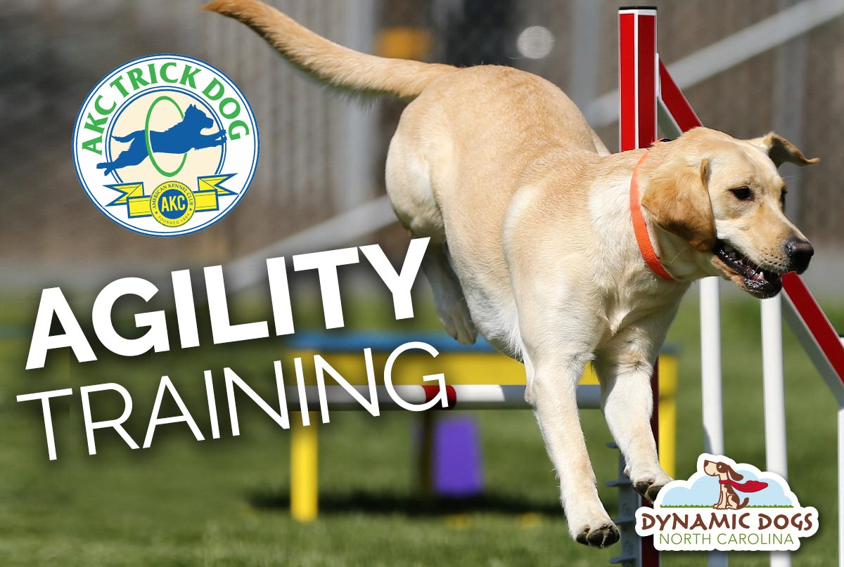 Agility Training Class – Harris Lake Park – Starting Saturday October 24, 2020 At 9:30AM