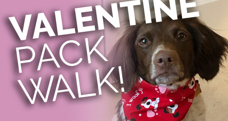 Valentine Pack Walk And Pups And Pints Event – February 2, 2019
